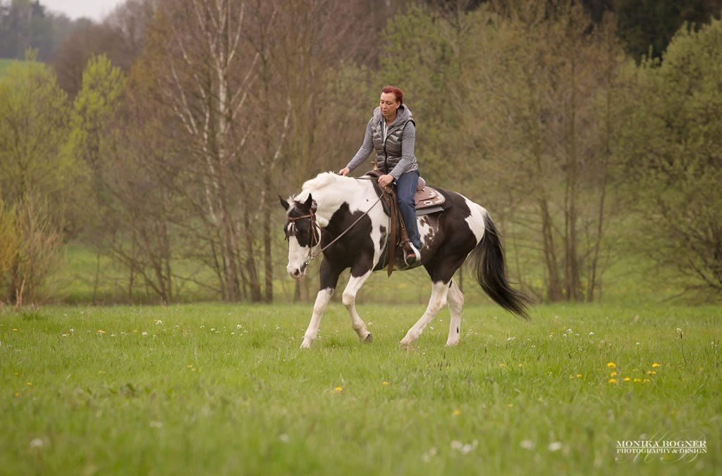 Paint Horse Stute - SkippBarSeven