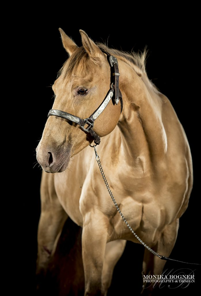 Quarter Horse Stute - Jodies Bailee