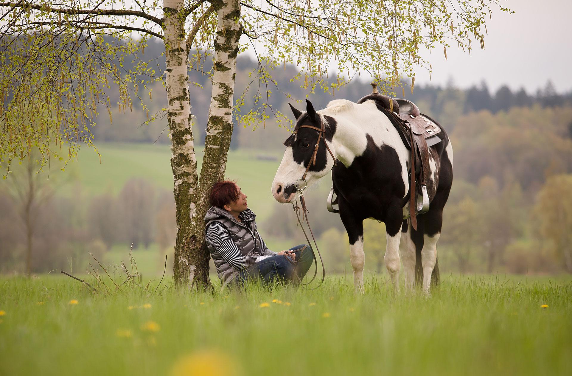 Paint Horse Stute – SkippBarSeven
