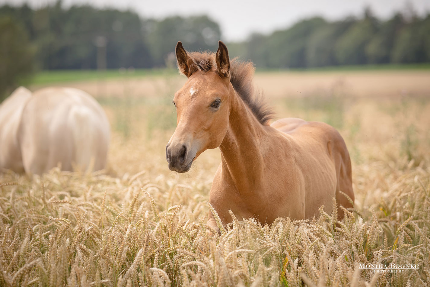 Quarter Horse Fohlen – DunItHighfive