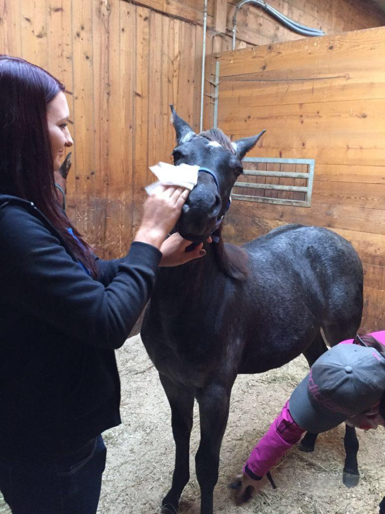 Quarter Horse Stute Fohlen – PeppyLittleBlueStar – 2016
