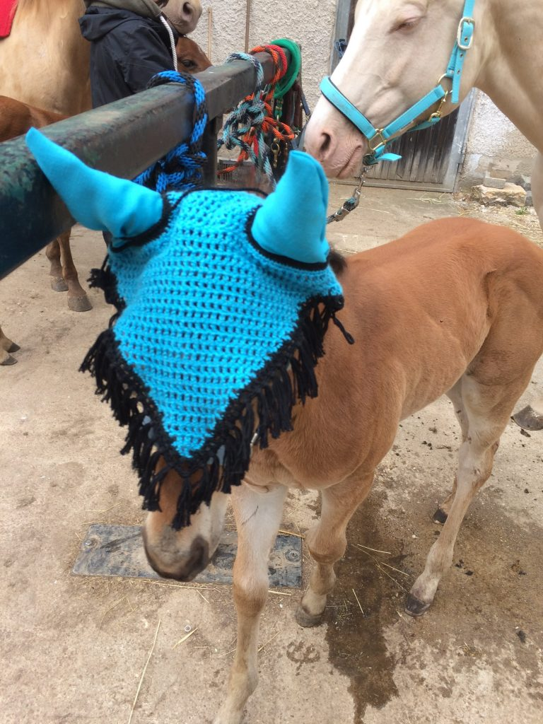 Quarter Horse Hengst Fohlen – DunItHighfive – 2016