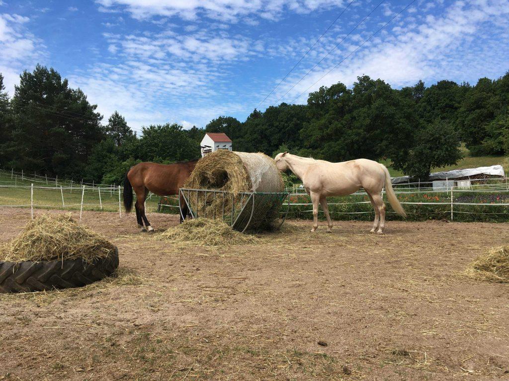 Quarter Horse Stute – TouchedByDestiny