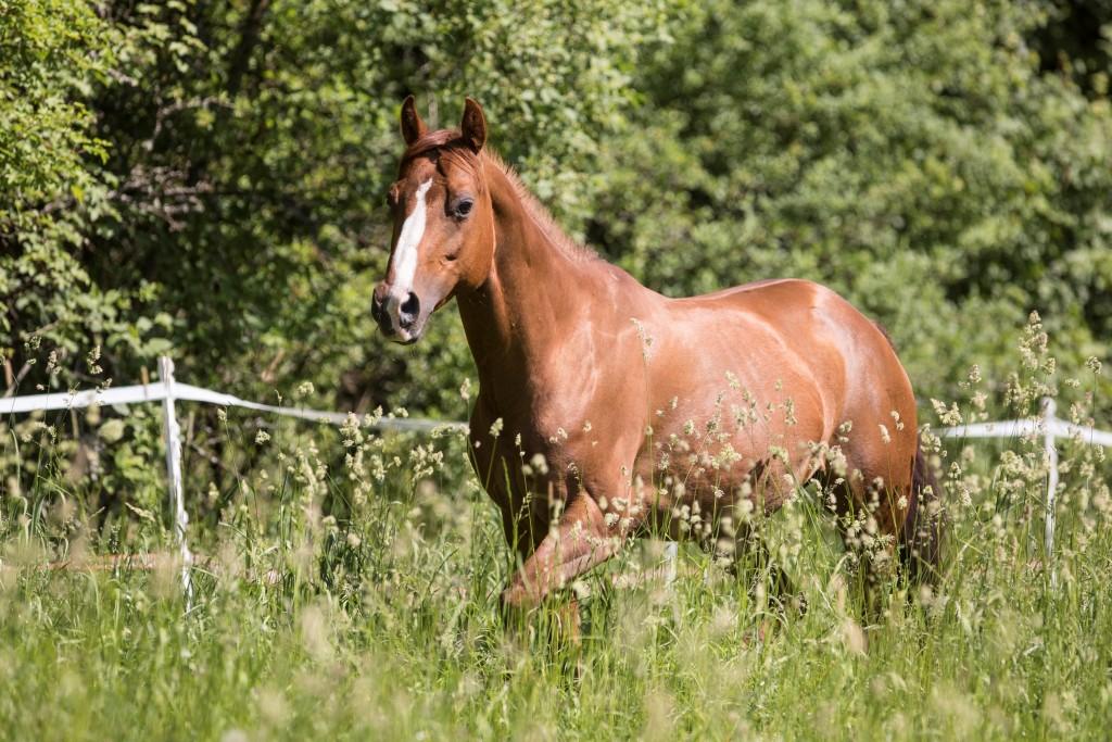 Quarter Horse Stute - IMMissHollywood