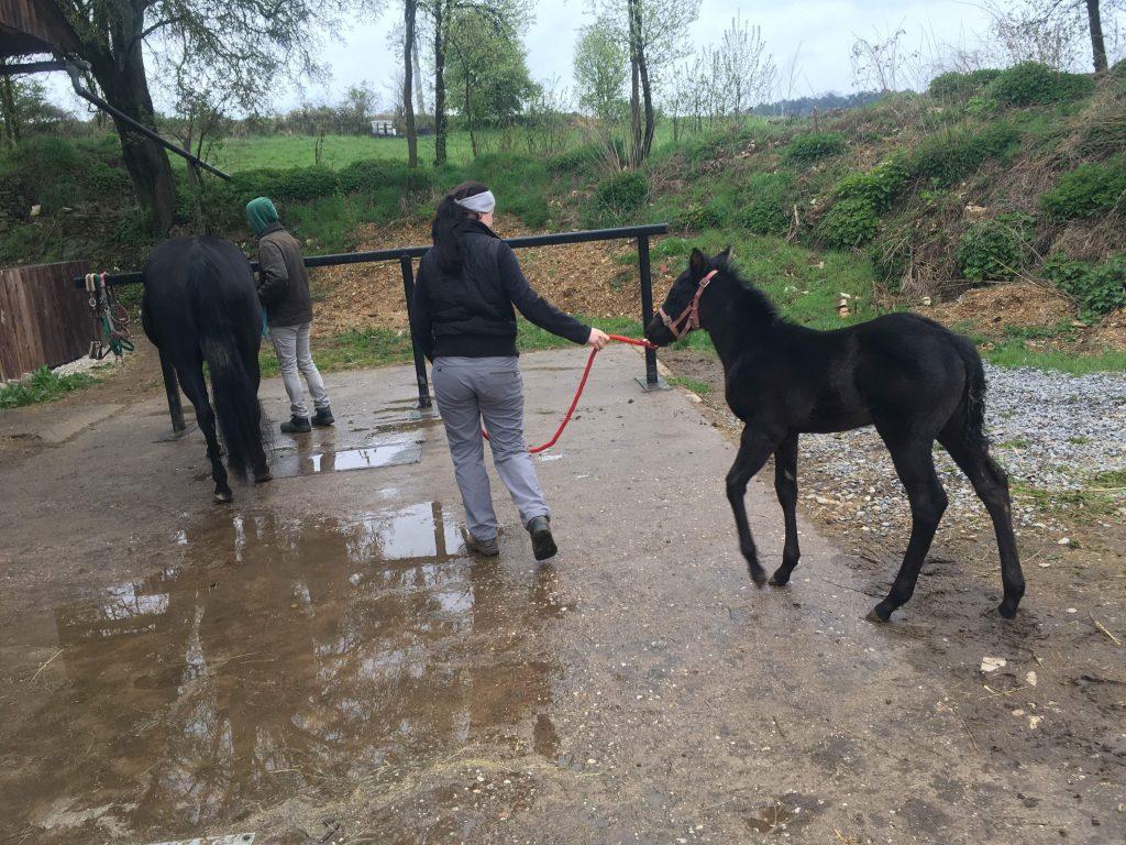 Quarter Horse Stute Fohlen – TheNightEdition – 2017