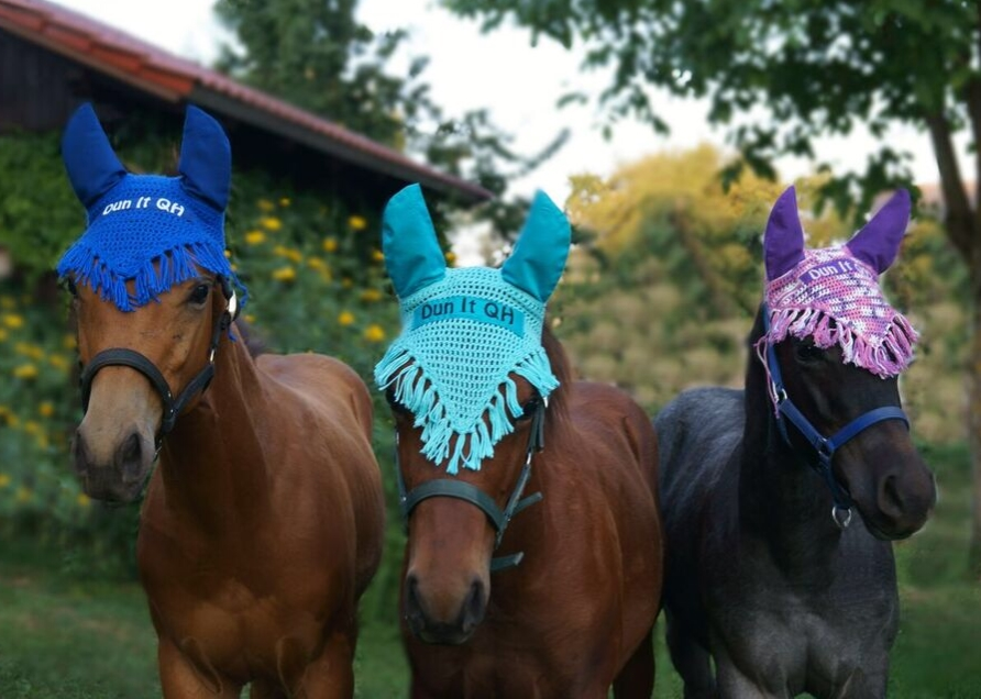 Quarter Horse Hengst Fohlen – DunItHighfive – 2016 + Quarter Horse Stute Fohlen – PippaHighfive – 2016 + Quarter Horse Stute Fohlen – PeppyLittleBlueStar – 2016
