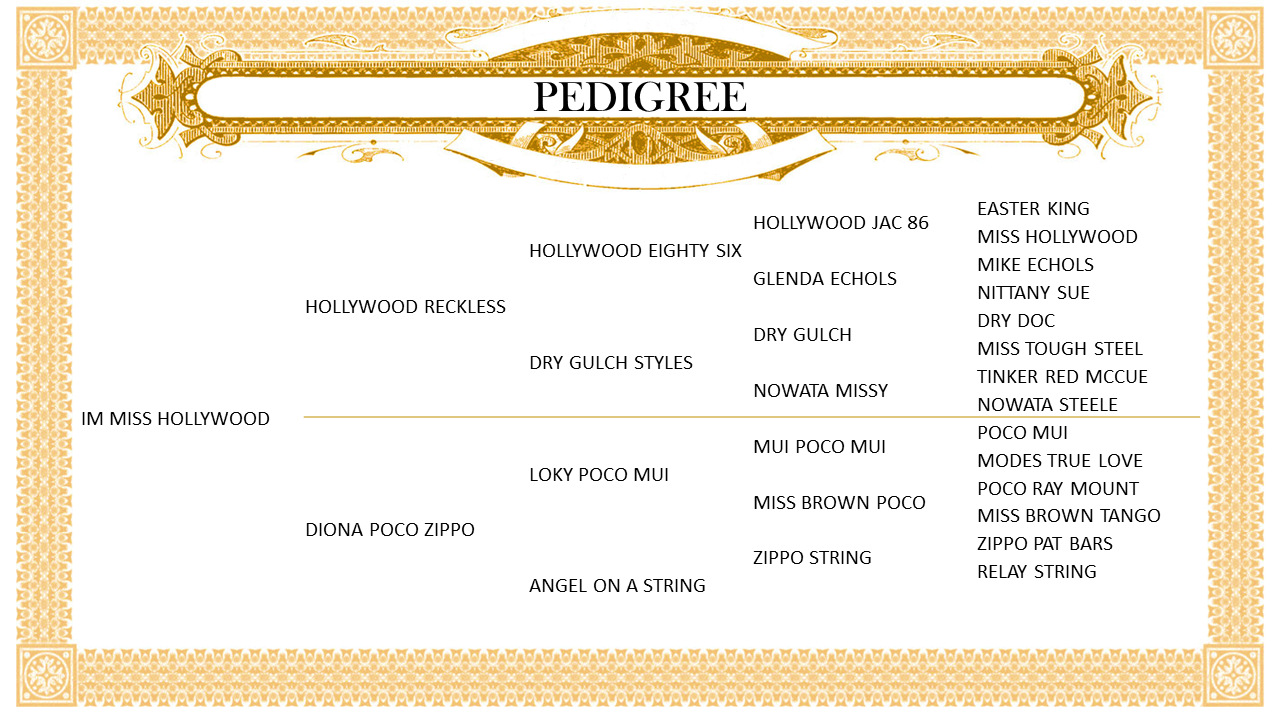 Pedigree_IMMissHollywood