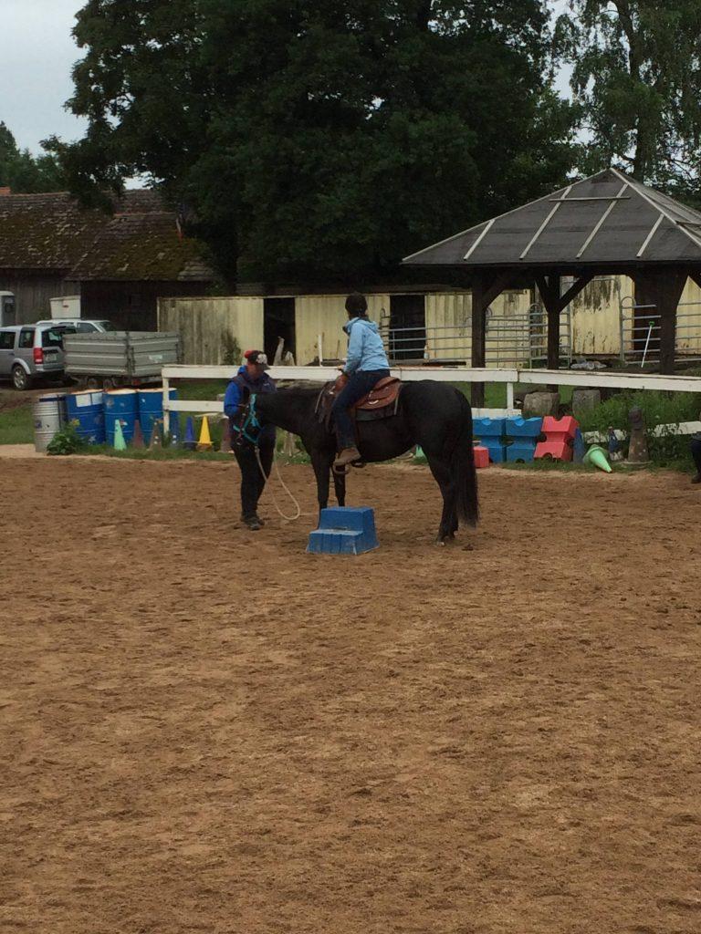 Quarter Horse Stute – BBuddyOnTheRockz
